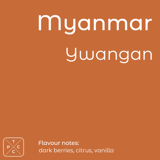 Myanmar, Ywangan, Award-winning Coffee