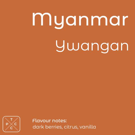 Myanmar, Ywangan, Award-winning Coffee