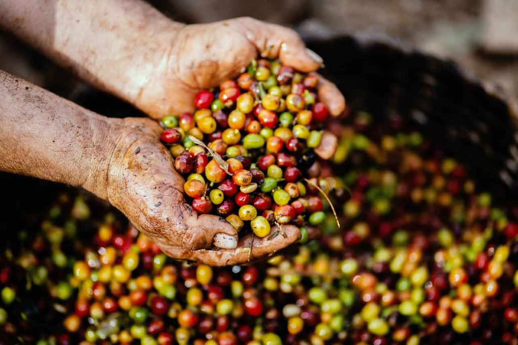 3 Reasons why Colombian Coffee is so Special