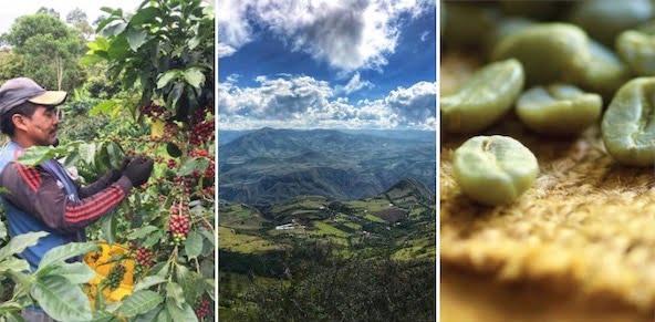 Colombia Medellin Coffee Farm