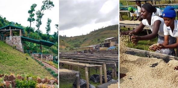 Rwanda, Inzovu, Coffee Farm